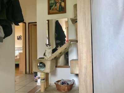 appartamento in vendita - merano Bilocale cod: 256